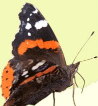Ervaring met Life-therapie en gezondheidscoaching